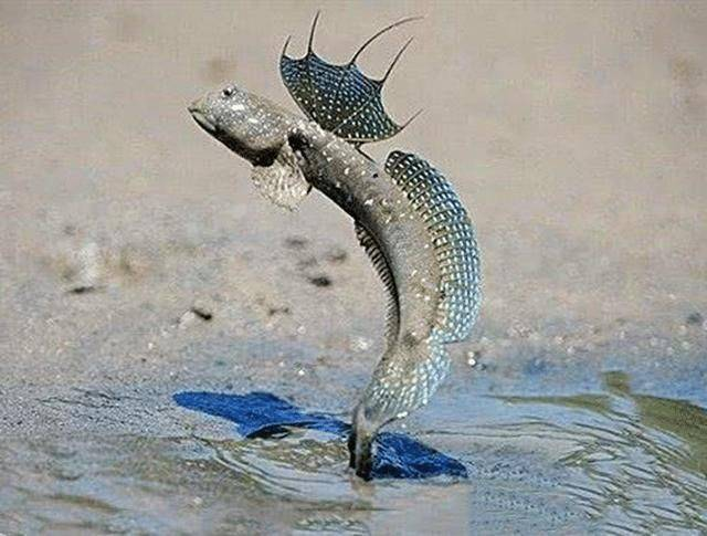 它大概是世界上最惨的鱼