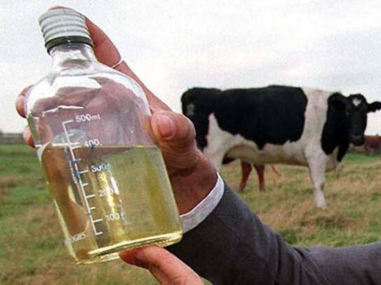 印度人用牛尿牛粪来做饮料和保健品,商店有卖,还很热销(1)